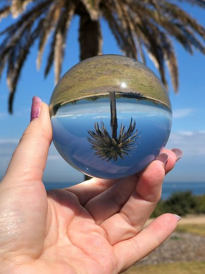 Shape Lines And Shapes Water Horizon Sunlight Growth Upside Down Reflection Palm Tree Lensball EyeEm Selects One Person Human Body Part Human Hand Hand Holding Nature Outdoors Land Body Part Unrecognizable Person Tree Focus On Foreground Human Finger Finger Close-up Sky Blue Plant Day