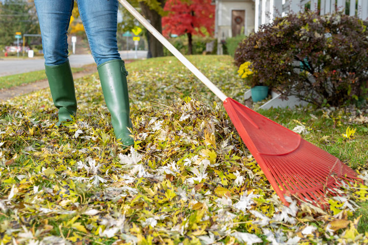 Low section of person with autumn leaves in yard