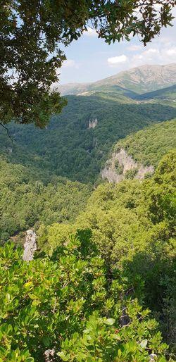 foresta di Addolí Tree Landscape