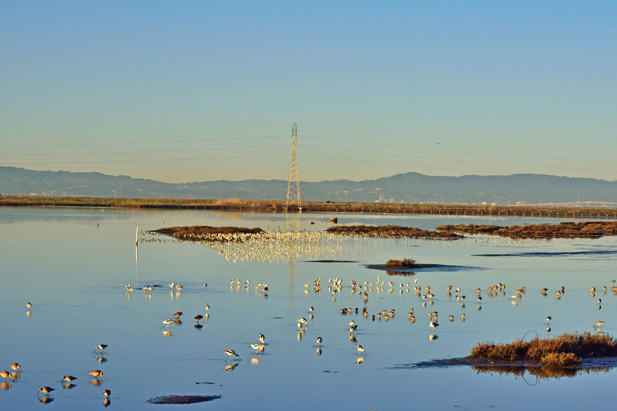 Sunrise @ Eden Landing Ecological Reserve 18 Hayward, Ca. Tidal Wetlands Marsh Nature Beauty In Nature San Francisco Bay Mudflats Waterbird Habitant Waterfowl Flock Of Birds Reflection Reflections In The Water Water Reflected Glory Eastbay Hills Marshlands Landscape_Collection Landscape_photography Sunrise Scenic Tranquility San Mateo Bridge Power Tower Power Lines