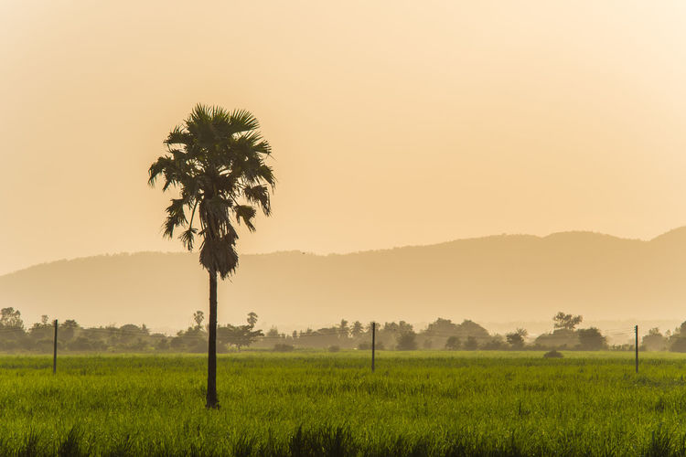 Land Tranquility Tropical Climate Environment Nature Sunset Scenics - Nature Landscape Tranquil Scene Growth Field Non-urban Scene Grass Rural Scene Tree No People Outdoors Beauty In Nature Coconut Palm Tree Sky Palm Tree Plant