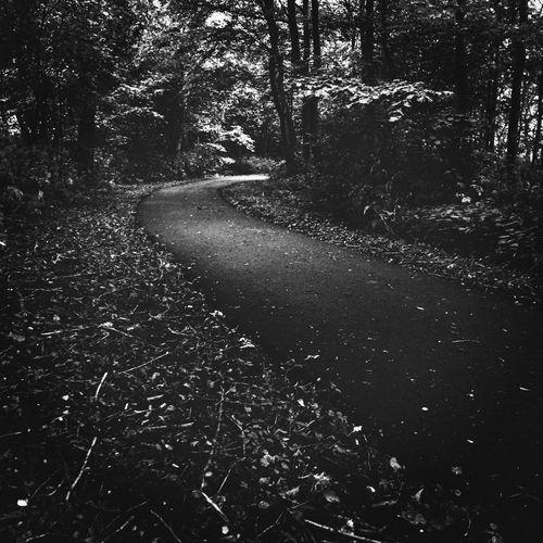 Woerden Blackandwhite Snakeroad Forest Path EyeEm Nature Lover EyeEm Best Shots