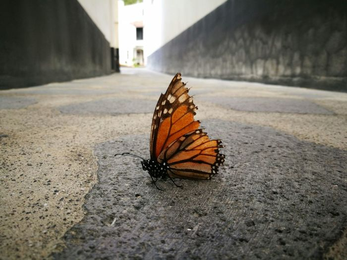 City Shadow Butterfly - Insect Animal Themes Close-up Building Exterior Butterfly Wild Animal Animal Wing Antenna Animal Markings Bug