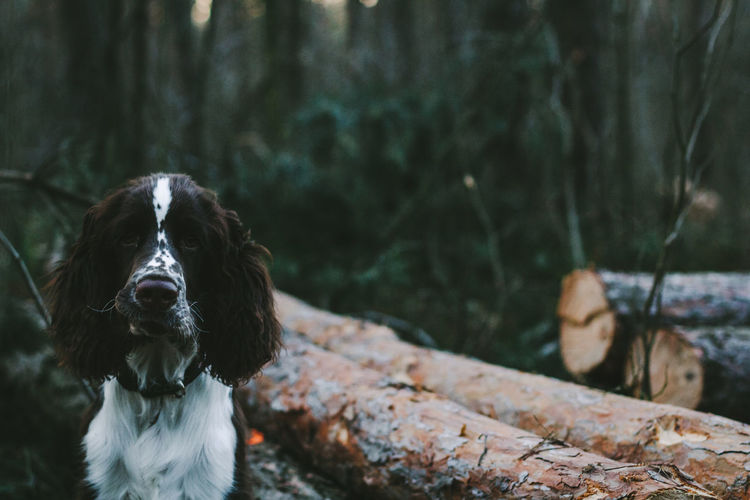Close-up portrait of dog in forest