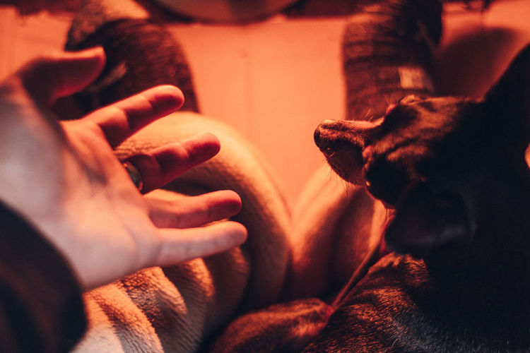 Close-up of hand with dog