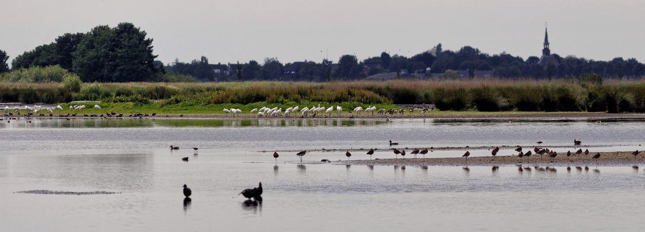 Fortyplus Spoonbills On A Row in the Netherlands Dutch Landscape In The Field Wetlands Landscape Birds EyeEm Birds