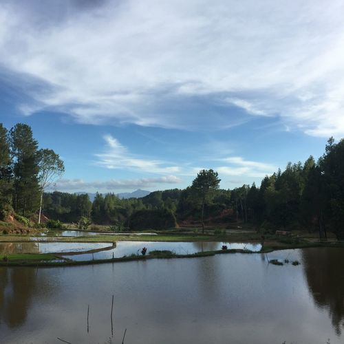Hill paddy field in Pangala, Tanah Toraja, indonesia Sky Tree Nature Reflection Tranquility Lake Water Scenics Beauty In Nature Tranquil Scene Cloud - Sky No People Outdoors Day Paddy Paddy Field EyeEmNewHere