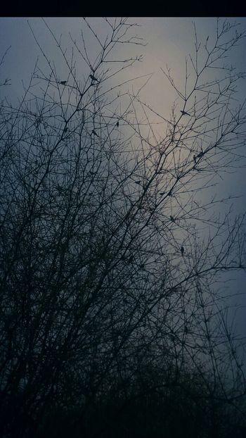 Urban Spring Fever Bamboo Trees Birds