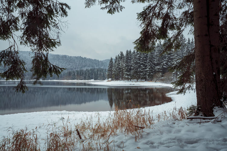 Winter forest and a lake early in the morning Background, Beautiful, Branch, Cold, Cool, Day, Forest, Frost, Frozen, Ice, Lake, Landscape, Leaves, Morning, Mountain, Nature, Outdoor, Outdoors, Park, River, Riverside, Scene, Season, Sky, Snow, Snow Cold, Snowfall, Snowy, Tree, Water, White, Winter, Wo Tree Snow Winter Cold Temperature Water Tranquility Beauty In Nature Lake Nature Scenics - Nature No People