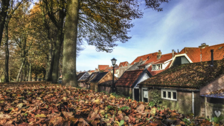 Beautifully situated on the edge lakes is one of the Dutch most famous old towns: ELBURG; a city with a great monumentality, Architecture Autumn Beauty In Nature Building Exterior Built Structure Change Day Dutch Elburg House Leaf Nature No People Outdoors Roof Sky The Netherlands. Tiled Roof  Tree