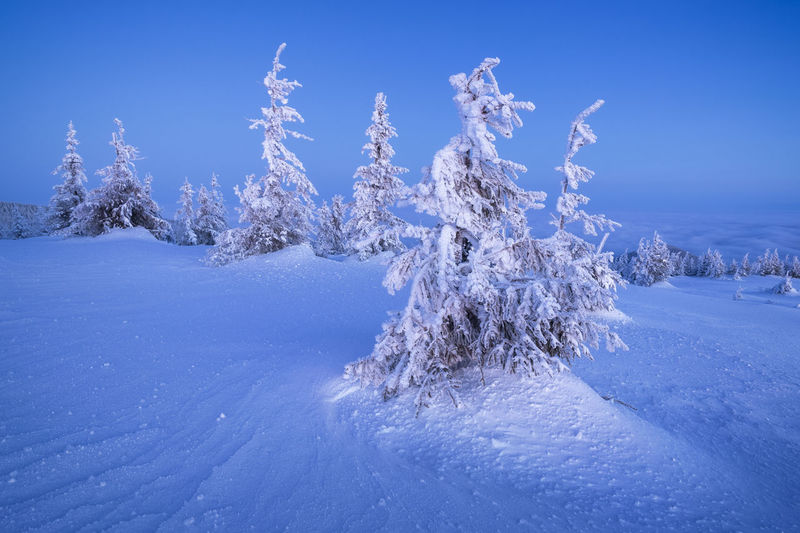 Scenic view of snow covered land against blue sky