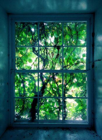 Windows to My Mind Abandoned Places Urbex Urban Exploration Plants Green Natural Light Sunlight Ivy Window Glass - Material Close-up Architecture Plant Green Color Built Structure Creeper Plant Window Sill Window Frame Plant Life