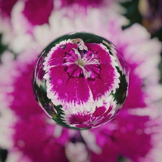 Marblecam Flowers Flower