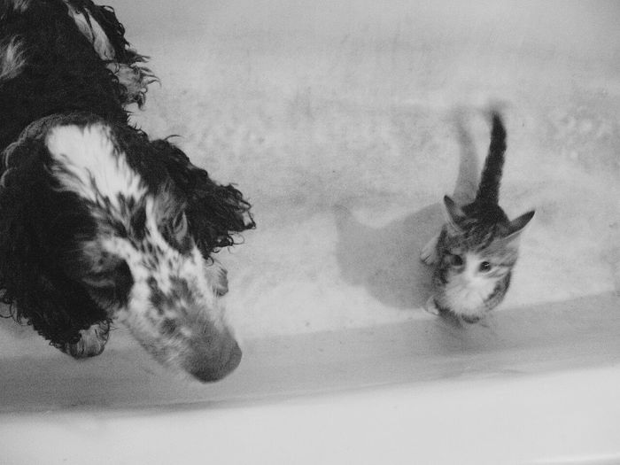 Animal Themes Mammal Taxidermy One Animal Animal Wildlife Indoors  No People Moose Animals In The Wild Snow Cold Temperature Day Nature Close-up Whale Moscow, Russia Photographing Photographer FUNNY ANIMALS Funny Moments Cat Dog Black & White Bathroom