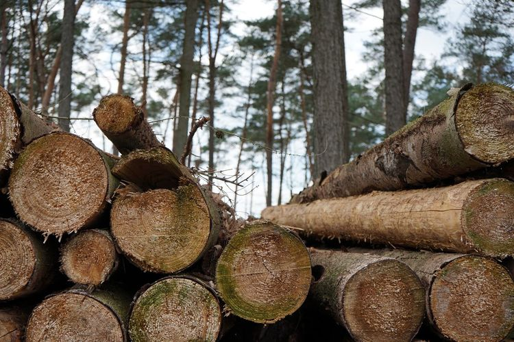 Tree Forest Log Timber Plant Firewood Deforestation Wood Stack Lumber Industry Tree Trunk Trunk Land Wood - Material Large Group Of Objects Nature Day Abundance Environmental Issues No People