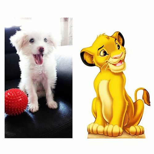 Feeling nya sya si Simba ng Lion King. 😁😁😁 KuchiAsSimba KuchiKing Feelnafeel