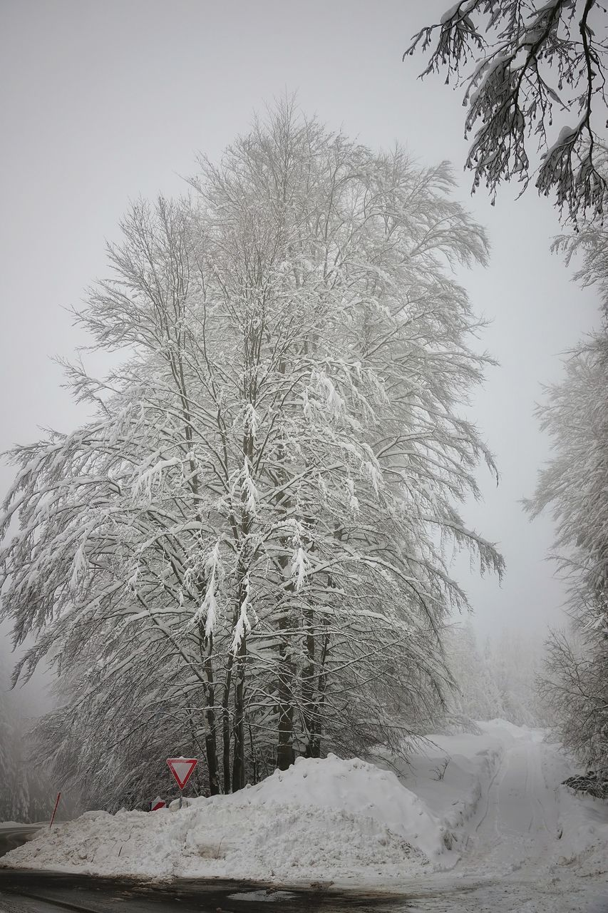 snow, cold temperature, winter, tree, plant, nature, sky, bare tree, tranquility, beauty in nature, no people, frozen, land, covering, day, tranquil scene, branch, scenics - nature, white color, outdoors, powder snow