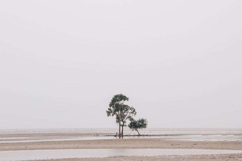 Sometimes we need space. Alone Beach Escapism Minimalism People Traveling Trees White