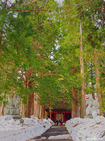 戸隠神社 奥社へ通じる杉並木は新緑と雪だった… 戸隠神社 Togakushi Shrine Shrine Cedars Verdure Enjoying Life EyeEm Nature Lover Nagano Japan