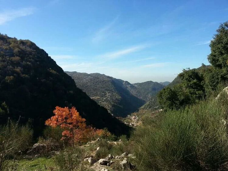 Mountain Nature Landscape Tree Mountain Range Scenics Beauty In NatureSky Tranquility Forest Tranquil Scene Outdoors No People Day Hiking Sunshine Green Beautiful View Beautiful Day Beauty Of Lebanon Lebanon