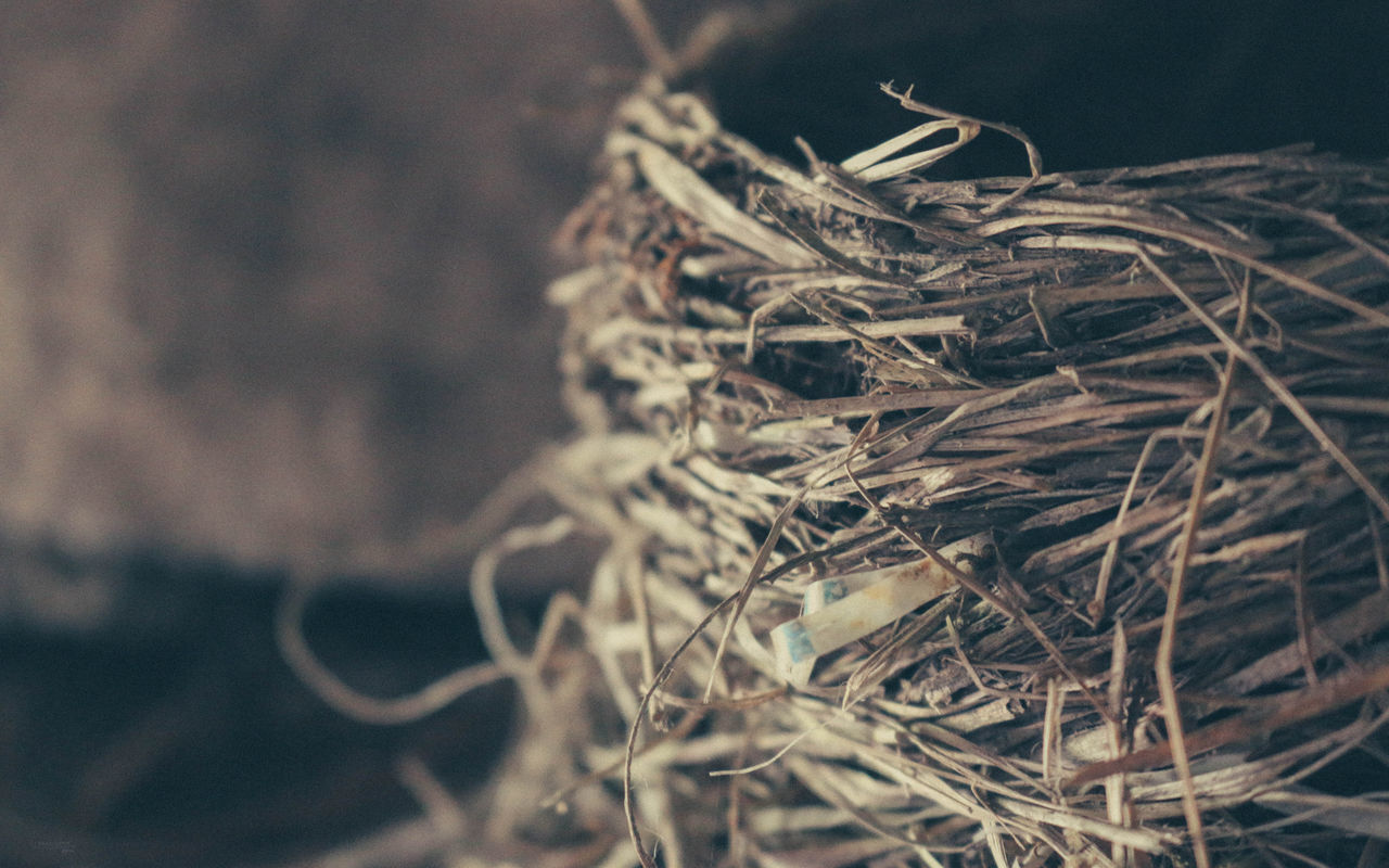 close-up, selective focus, focus on foreground, no people, day, nature, plant, dry, tangled, tree, twig, outdoors, complexity, dried plant, dead plant, still life, rope, pattern, branch, brown