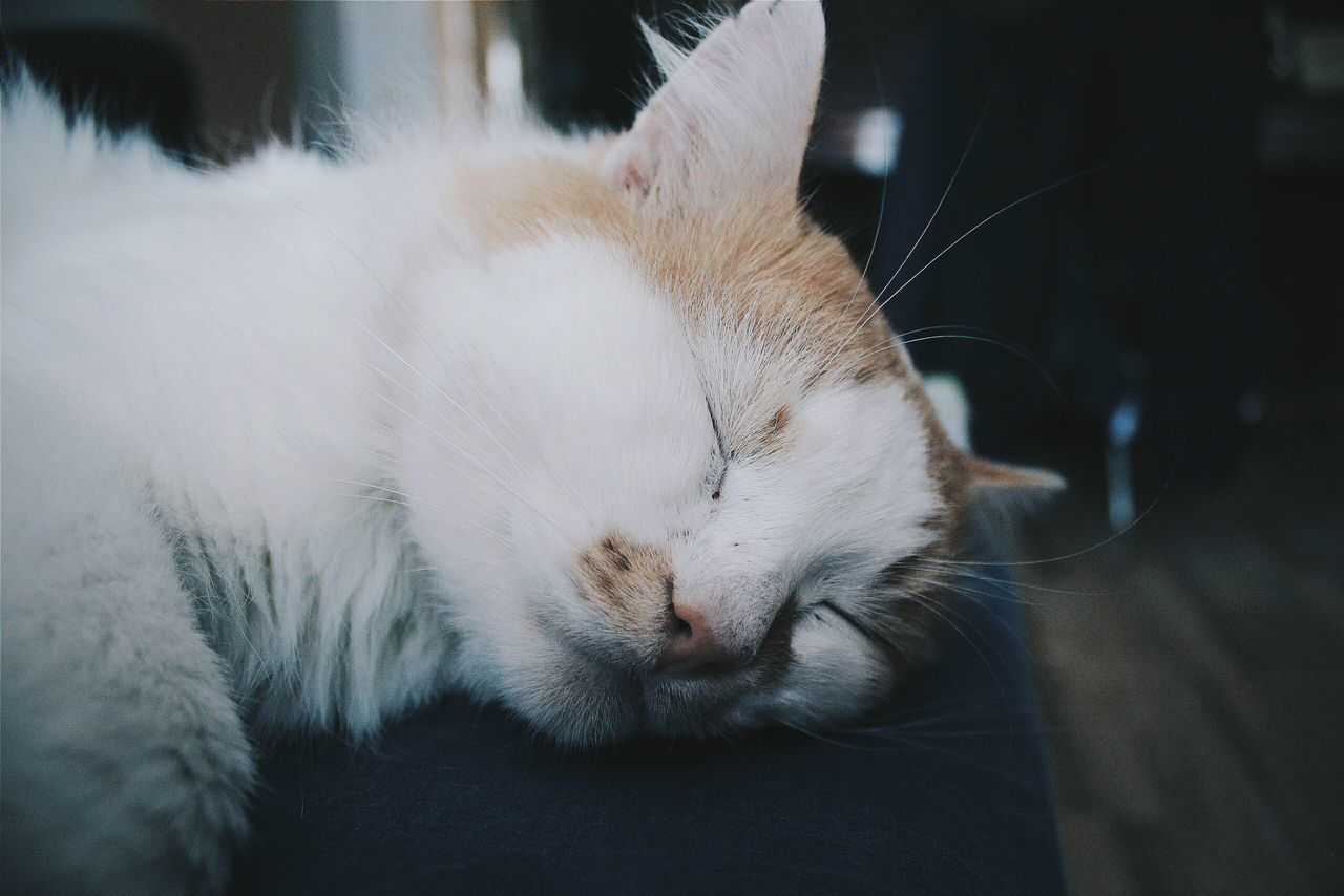 Close-Up Of Cat Sleeping At Home