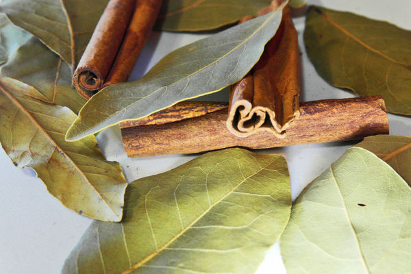 Chemistart Cinnamon Rolls Cinnamon Roll  Autumn Beauty In Nature Change Cinnamon Cinnamon Sticks Cinnamonrolls Close-up Day Fragility Growth Laurel  Laurel Leaves Laurel Wreath Leaf Maple Nature No People Outdoors Food Stories