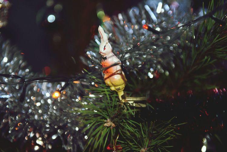 Christmas Christmas Tree Christmas Decoration Illuminated Tree Toys New Year New Year 2017 заяц елочные игрушки ёлочное украшение No People Day