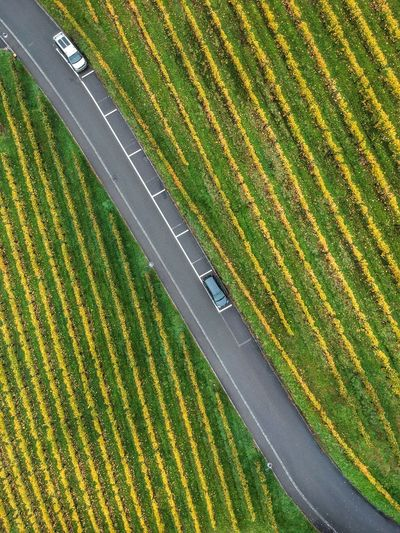 Topdown view of road diagonally slicing the vines DJI X Eyeem Dji Spark Dronephotography Green Color High Angle View Plant No People Nature Land Field Transportation Rural Scene Full Frame Road Day Growth Grass Landscape Agriculture Environment Yellow Beauty In Nature Outdoors It's About The Journey