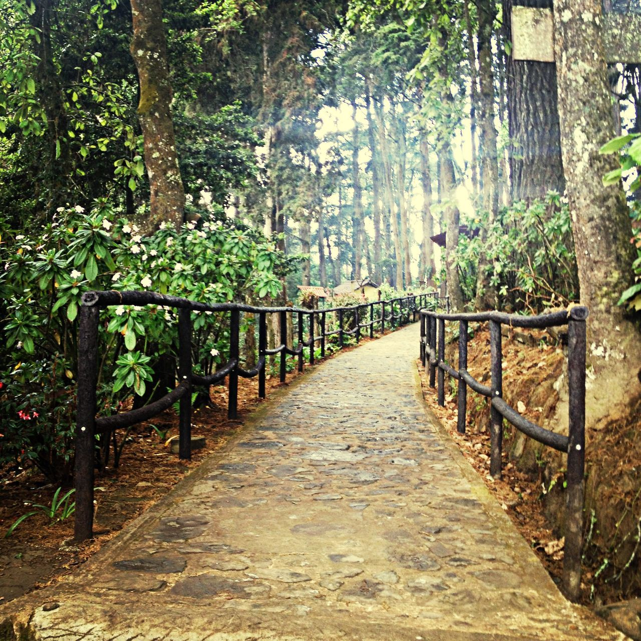 Walkway at ecological park
