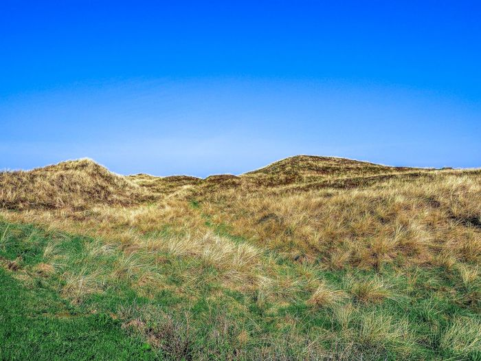 Dunes in Denmark Klitmøller Denmark Dunes Blue Sky Copy Space Nature Day Tranquility Land Clear Sky No People Landscape Scenics - Nature Beauty In Nature Plant Tranquil Scene Sunlight Growth Field Environment Outdoors