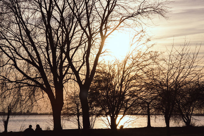 Elbe River Bare Tree Beauty In Nature Branch Day Landscape Nature No People Outdoors Scenics Silhouette Sky Sunset Tranquil Scene Tranquility Tree Tree Trunk Water Winter