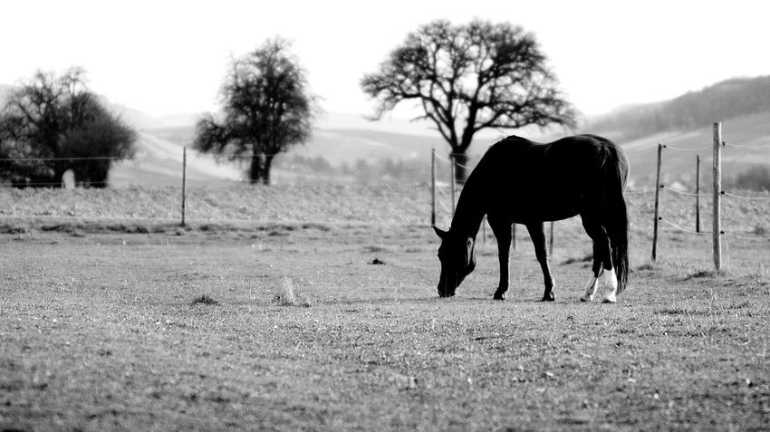 Animal_collection Animal Photography EyeEm Nature Lover EyeEm Gallery Portrait Photography EyeEm Best Shots - Nature EyeEm Best Shots Eyem Best Shots - Black + White EyeEm Best Shots - Black + White Monochrome _ Collection Monochrome Blackandwhite Black And White Collection  Landscape #Nature #photography Cloud And Sky Sky And Cloud Heilbronn Germany Landscape_Collection Landscape_photography Landscape Nature Photography [ Landscape Horse Photography  Horse Life Horselove Black And White