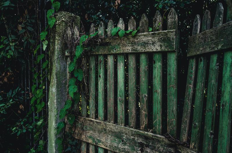 Wooden door Day