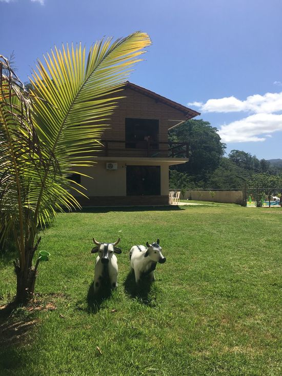 Goiabão/Muqui/Espírito Santo/Brasil Architecture Building Exterior Built Structure Domestic Animals Green Color Mammal Animal Themes House No People Tree Growth Sky Outdoors Day Nature