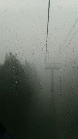 ブナ林へ。雨…霧… Walking Around Hugging A Tree Relaxing Nature_collection雨のブナ林はとてもキレイなんだそうです🍃 行ってきます👋