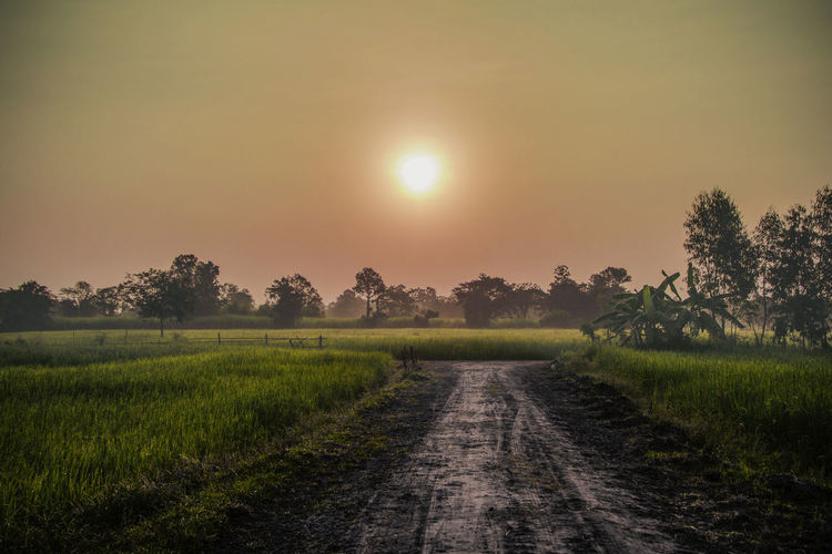 morning Plant Sky Tranquility Tranquil Scene Sun Landscape Scenics - Nature Sunset Grass Field Tree Land Environment Beauty In Nature Direction The Way Forward Nature No People Growth Rural Scene Outdoors Bright