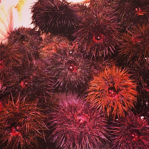 Sea Urchin Market Fish Fishy Market Food Fresh Catch Spain♥ Barcelona Exploring Red Seafood No People Food Sea Life Large Group Of Animals Outdoors Close-up Animal Themes UnderSea Freshness Day