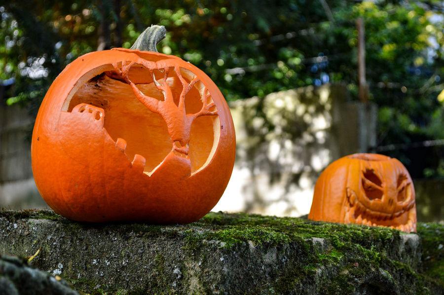 Pumpkin Halloween Orange Color Jack O' Lantern Holiday - Event Celebration Anthropomorphic Face Squash - Vegetable Vegetable Jack O Lantern Scarecrow Autumn Outdoors Gourd Close-up