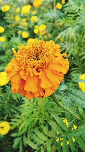 Flower Nature Yellow Plant Petal Fragility Growth