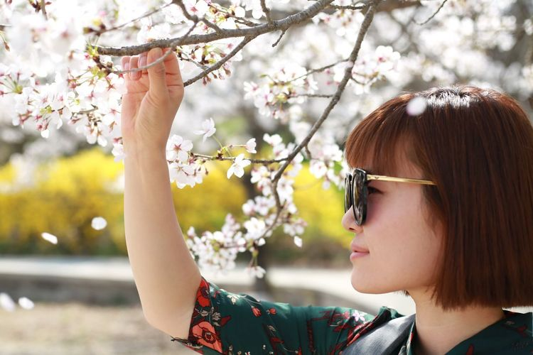 Profile view of woman wearing sunglasses while standing below cherry blossoms
