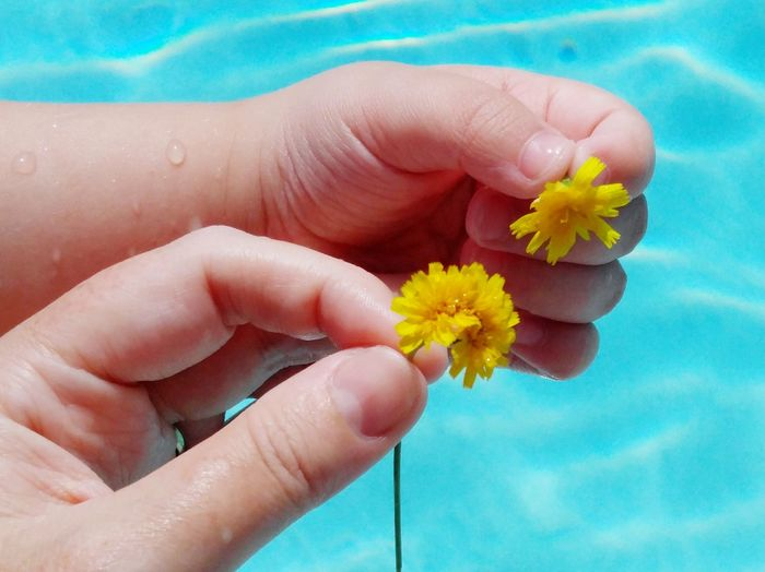 Person Holding Flower Close-up Focus On Foreground Blue Flower Head Fragility Beauty In Nature Outdoors Personal Perspective Mother & Daughter Pool