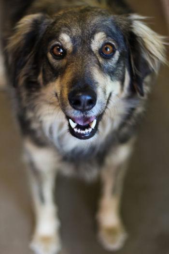 Dog Canine Domestic Animals Animal Animal Themes Pets One Animal EyeEmNewHere