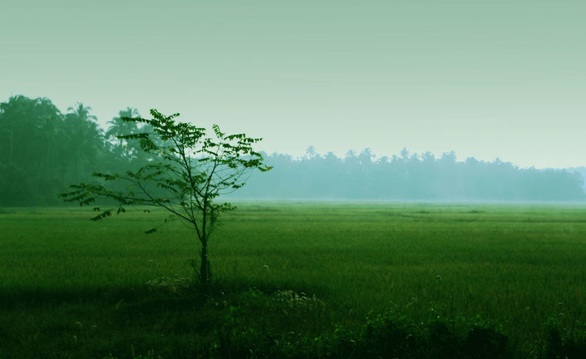 Landscape Tree Rural Scene Field Fog Agriculture Farm Nature Springtime Meadow Beauty In Nature Green Color Scenics Outdoors No People Winter Grass Forest Beauty Day