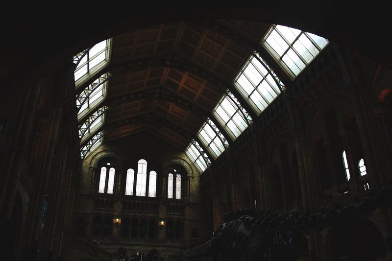 Natural History Museum London Museum Fosiles Dinosaur City Architecture