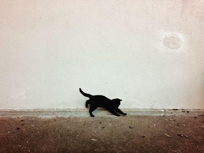 Black dog sitting on wall