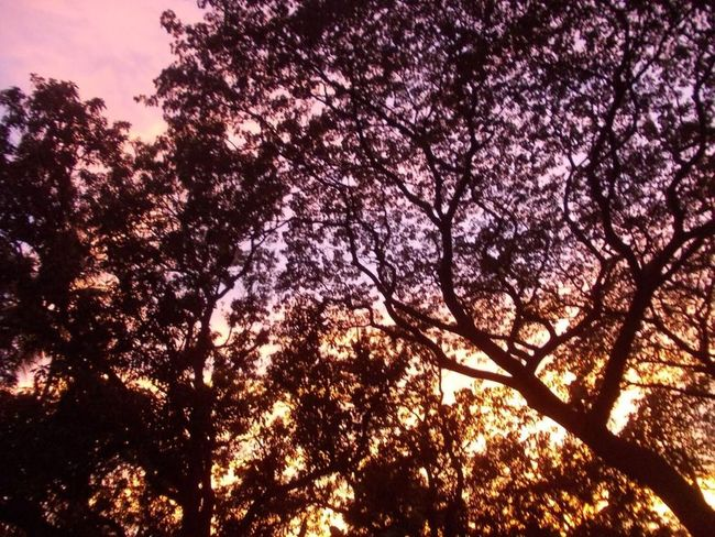 Colors Nature Beauty In Nature Low Angle View Nature No People Outdoors Sky Sunset Tree Twilght