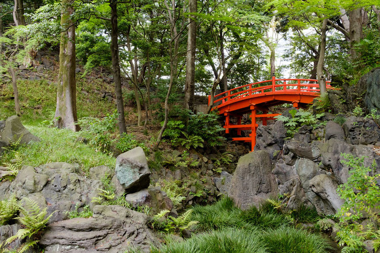 Green Color Koishikawa Korakuen Gardens No People Outdoors Pontine Pons Bridge Red Tokyo Tree