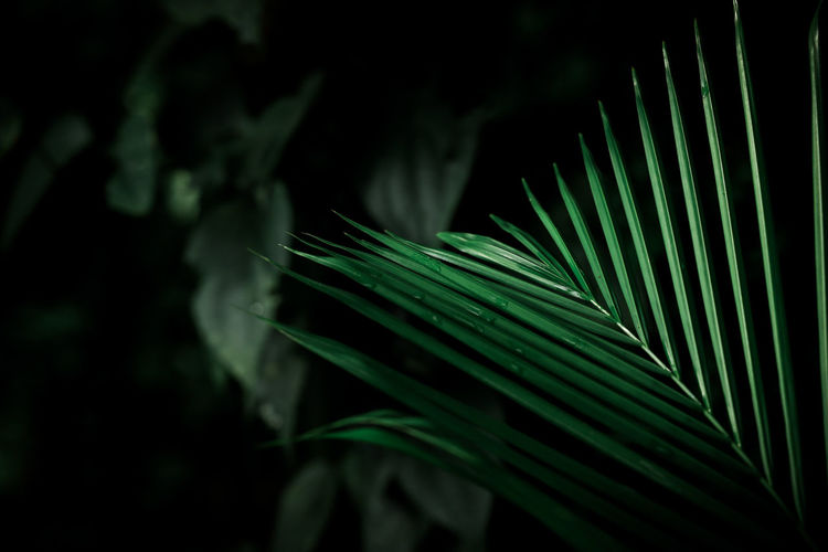 Green tropical palm leaves, dark green background
