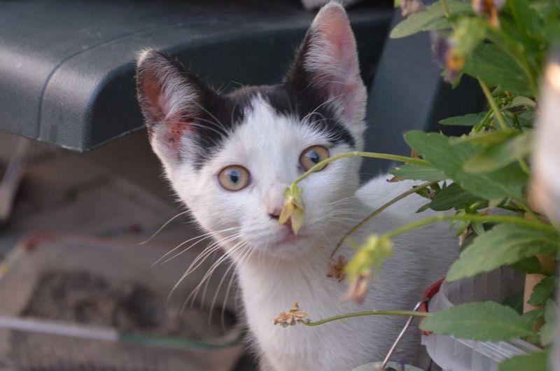 Close-up portrait of cat by plant